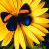 Аватар пользователя PashuniA