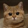 Аватар пользователя Spleandidag