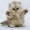 Аватар пользователя cat75