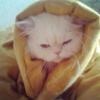 Аватар пользователя Akemi88