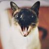 Аватар пользователя RinaCook