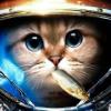 Аватар пользователя NobleCat