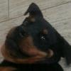Аватар пользователя Simbi