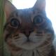 Аватар пользователя gurga88