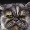 Аватар пользователя KostaKojin