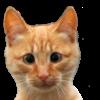 Аватар пользователя octopups