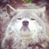 Аватар пользователя wind2s5