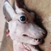 Аватар пользователя Bushmeat