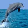 Аватар пользователя dolphinoff