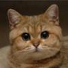Аватар пользователя ALeonBuhgalter