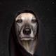 Аватар пользователя KorvinAlex