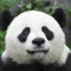 Аватар пользователя CamiyDobriy