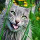 Аватар пользователя MeinKote