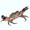Аватар пользователя Crabby
