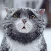 Аватар пользователя MioRomi