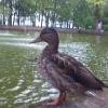 Аватар пользователя teatey