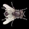 Аватар пользователя FlyingInsect