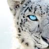Аватар пользователя snowcheg