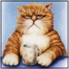 Аватар пользователя jogray