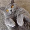 Аватар пользователя Tapinambyr