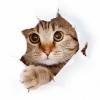 Аватар пользователя liman49