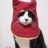 Аватар пользователя shidaro