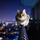 Аватар пользователя Alisa822