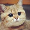 Аватар пользователя MikeL