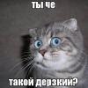 Аватар пользователя 3JIEKTPNK
