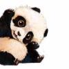 Аватар пользователя panda76