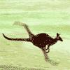 Аватар пользователя wrooom