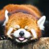 Аватар пользователя PandaFromTheHell