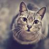 Аватар пользователя Roentgenium