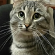 Аватар пользователя Musida