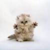 Аватар пользователя lu4shiy