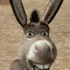 Аватар пользователя donkey900kg