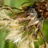 Аватар пользователя kolya24