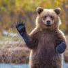 Аватар пользователя grizzly1408