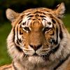 Аватар пользователя tigeer