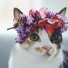 Аватар пользователя OliverCrash