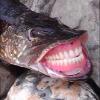 Аватар пользователя BelyiArt