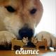 Аватар пользователя TheManKorzh