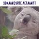 Аватар пользователя Sheyker