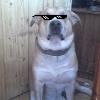 Аватар пользователя OMegaDog
