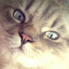 Аватар пользователя AshenD