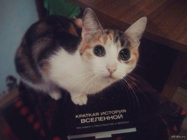 Кот с глазами космоса