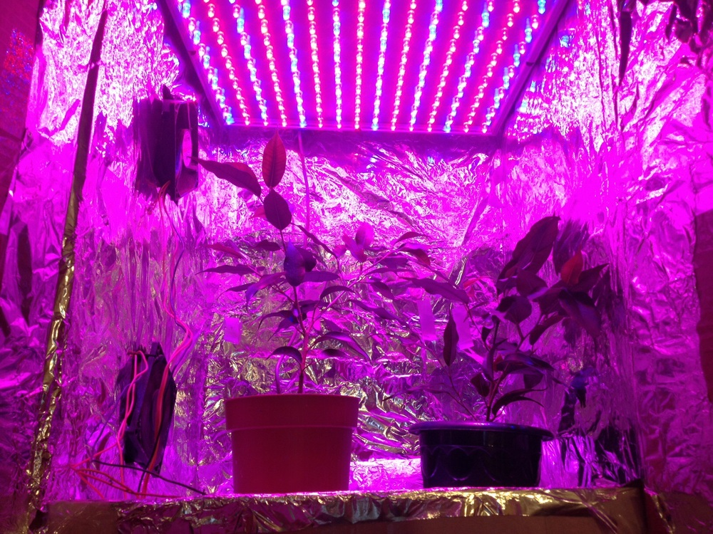 Какой свет лучше для выращивания марихуаны курение марихуаны до беременности