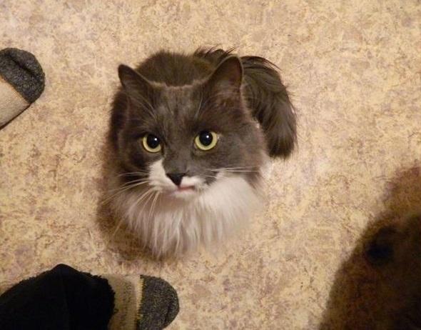 У кота вылез клык наружу
