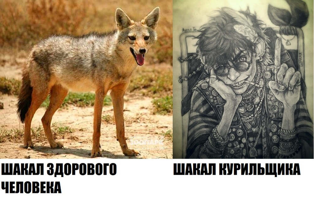 https://cs6.pikabu.ru/images/big_size_comm/2015-03_7/14278027516934.jpg