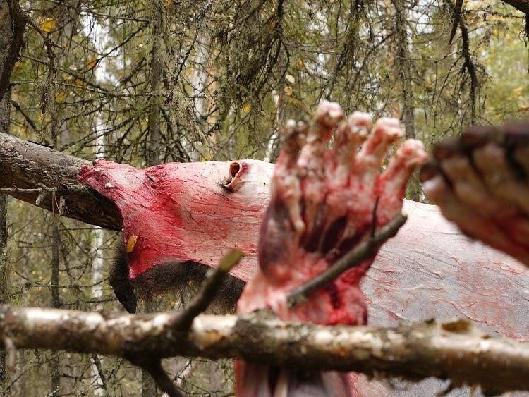Фото медведицы без шкуры
